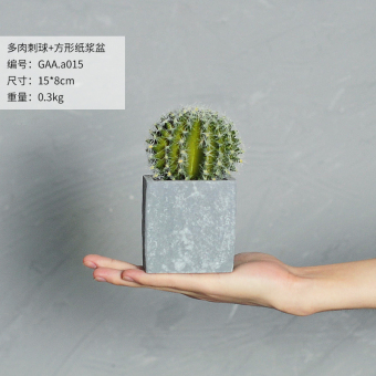 Garden model plant succulent potted small ornaments