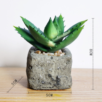 Pastoral European succulent model plant small Bonsaii