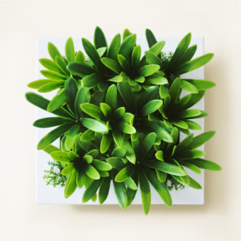 Three-dimensional Model succulent plant wall hangers
