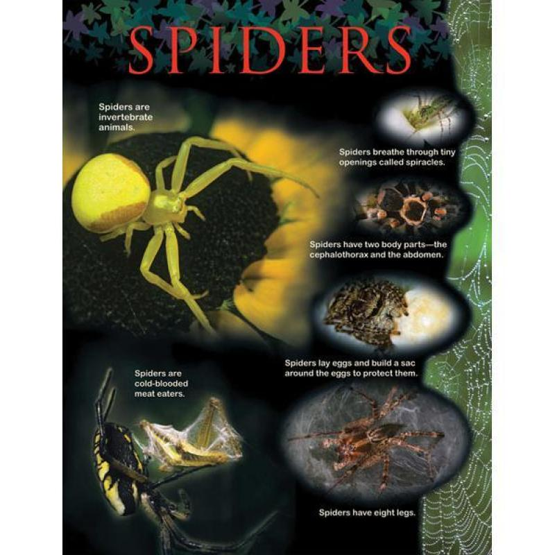 CTP1169 Spiders Animal Classification Chart