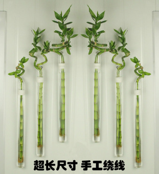 Creative wall transport bamboo hydroponic glass vase craft small flower holder pendant home wall decorative New Style