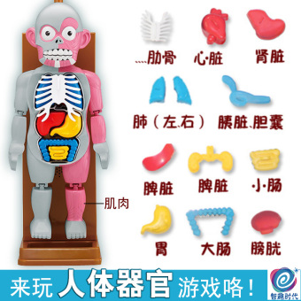 Harga Science area kindergarten pupils creative toys diy small production of materials science and technology zone angle of human organ models